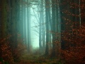 A Walk Among the Trees: A Look at Forests in Myth and Media