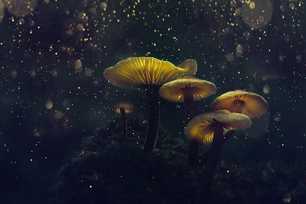 Magic Mushrooms by Emre Öztürk