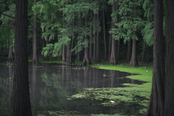 Swamp Lake by Chloé Lam